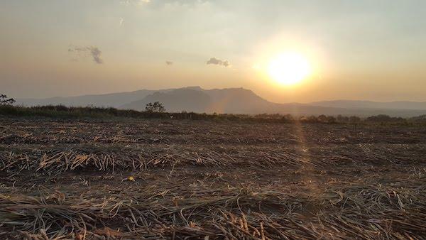 sunset over sugarcane field in Guatemala