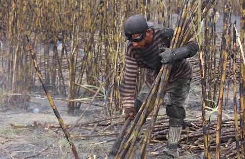 Sugarcane worker in Guatemala cutting cane