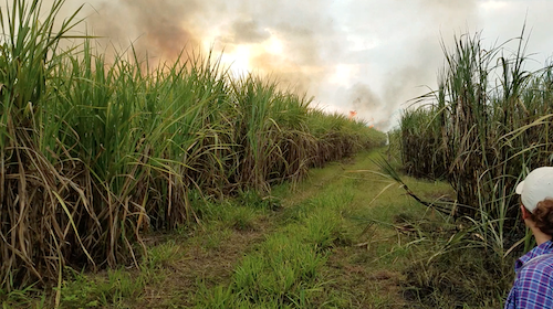 Burning sugarcane file in Guatemala