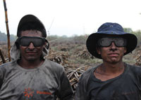 two sugarcane cutters