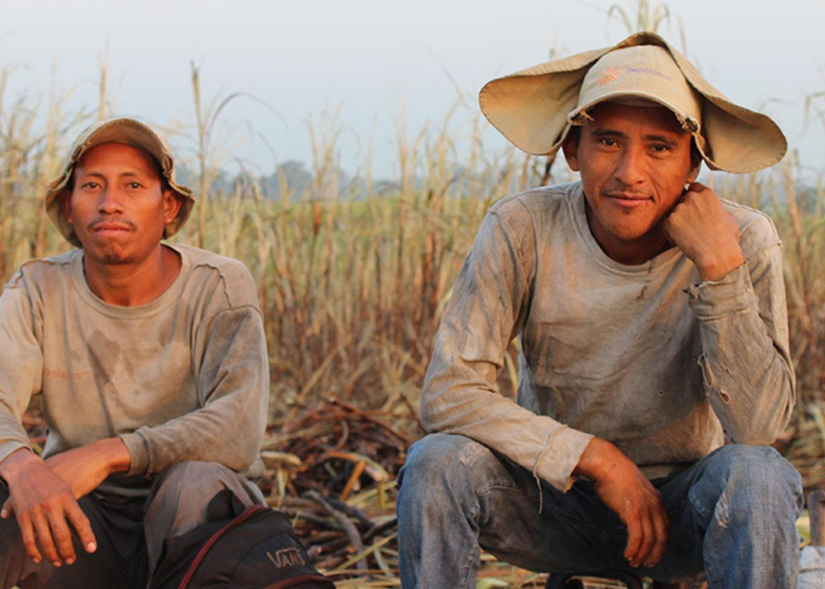 sugar cane workers
