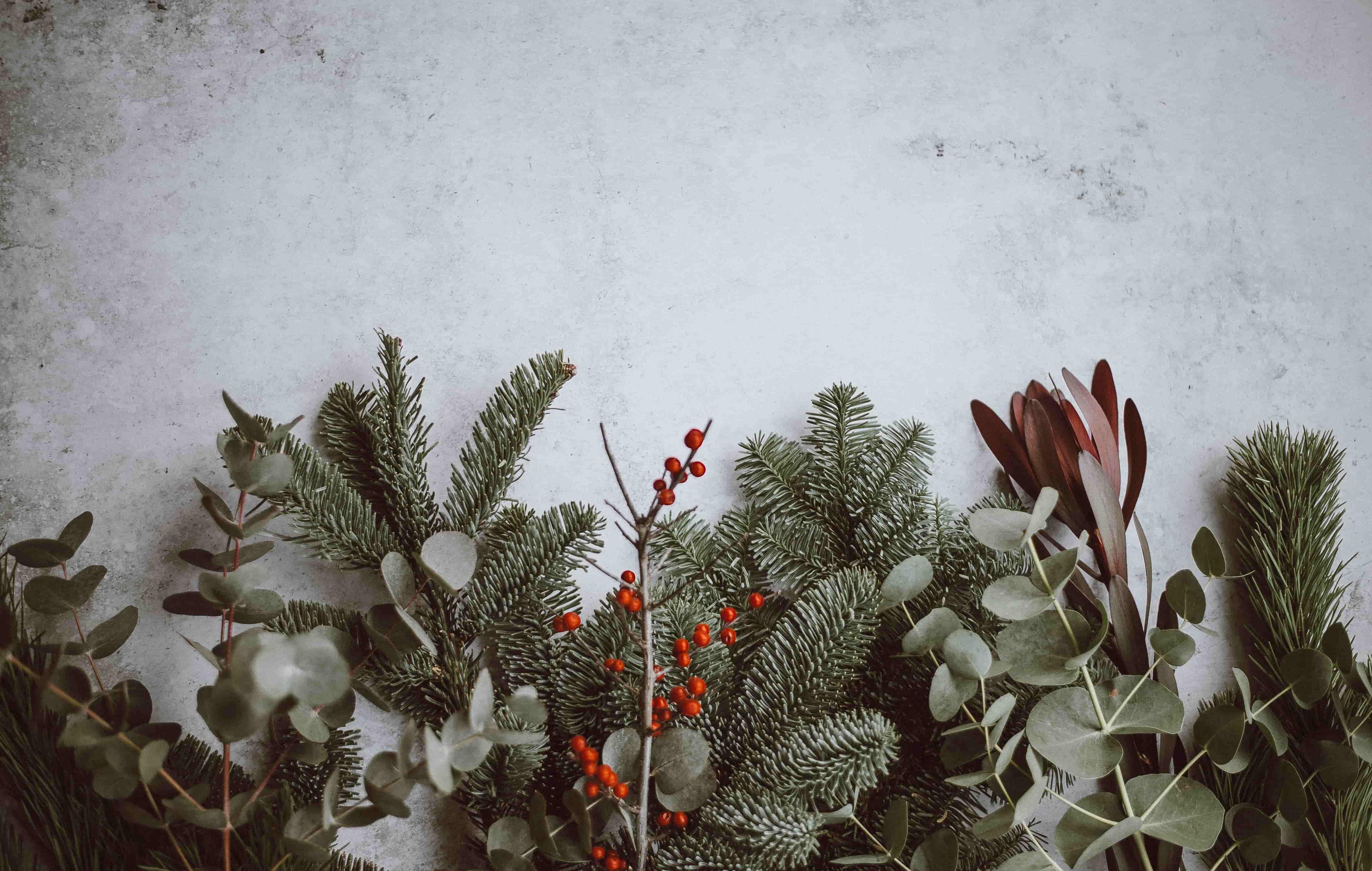 holly, winter