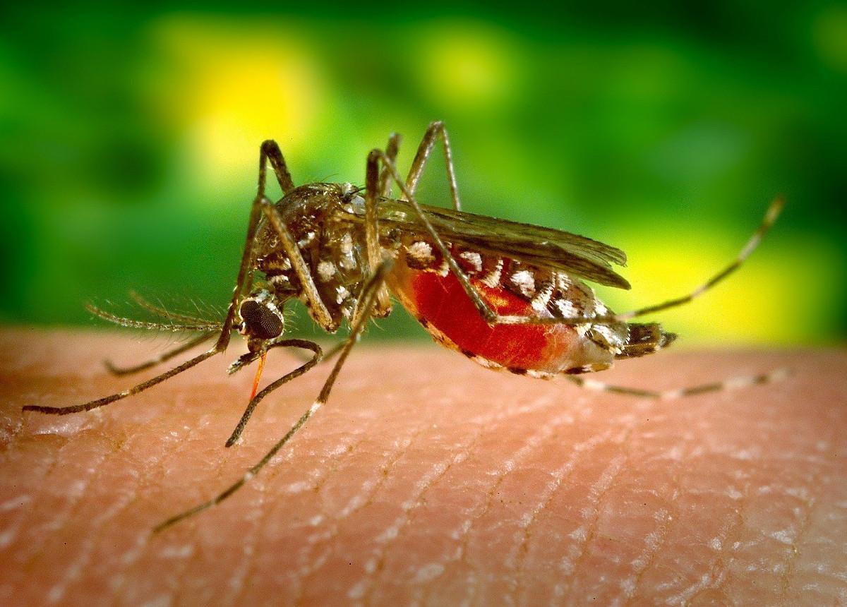 mosquito biting skin