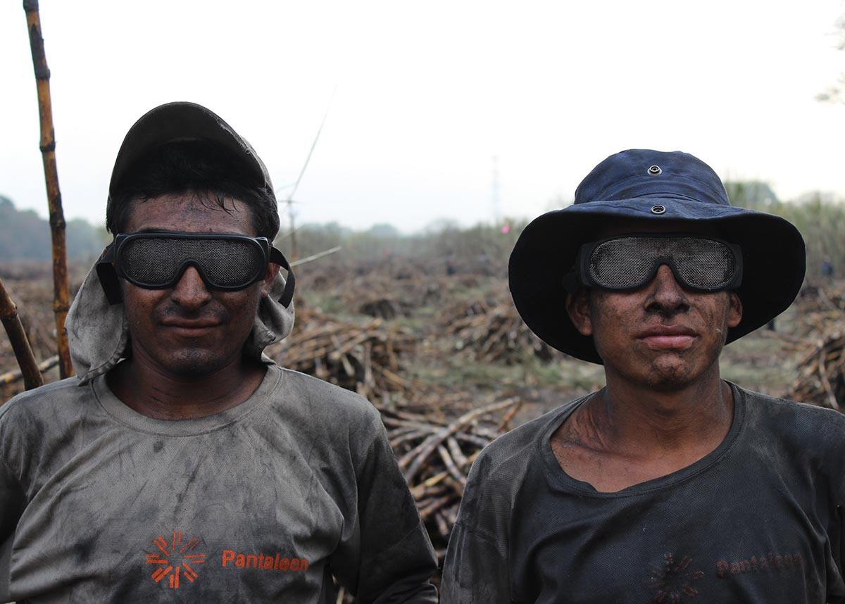 two workers in a sugarcane field