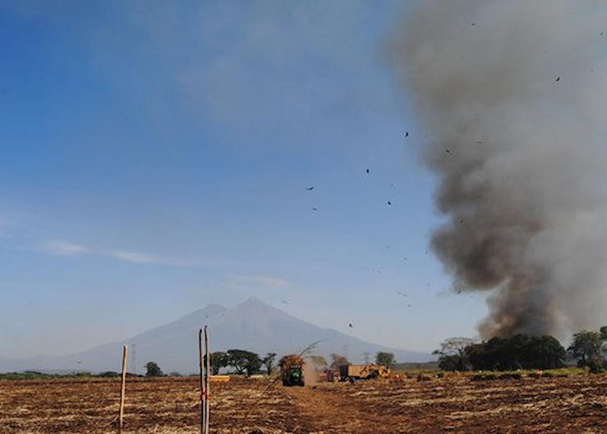Sugar cane fields burning before harvest